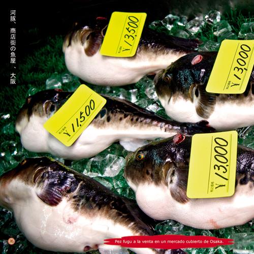 Soñar con Japón – Libro de fotografía de Alejandro Cremades, David Esteban, David Morales, Héctor García y Javier Serrano. Editado por Fotocompra.com